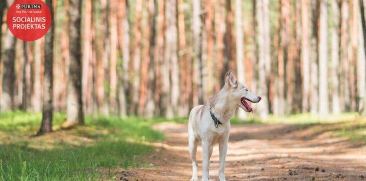 Tris šunis auginantis vilnietis: svarbiausia įsitikinti ar gyvūnas jums tinka