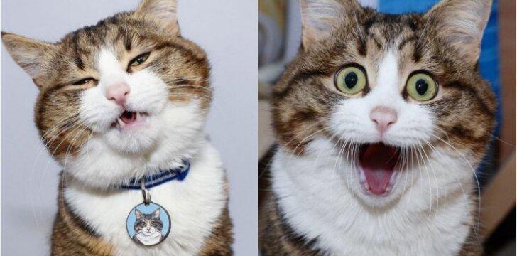 Išraiškinga katė
