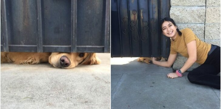 Šuo kasdien laukia iš mokyklos grįžtančios mergaitės