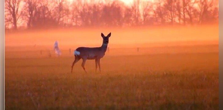 Epizodas iš filmuko apie Lietuvos gamtą/ M. Karlono filmo stopkadras