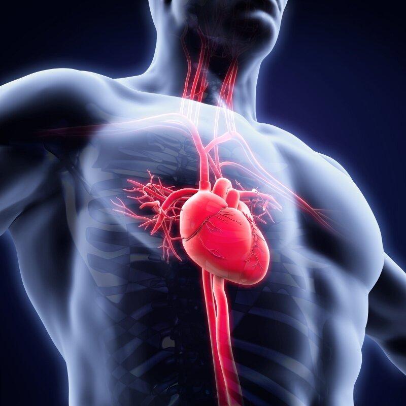geriausi širdies ir kraujagyslių sveikatos papildai | tarasgames.lt