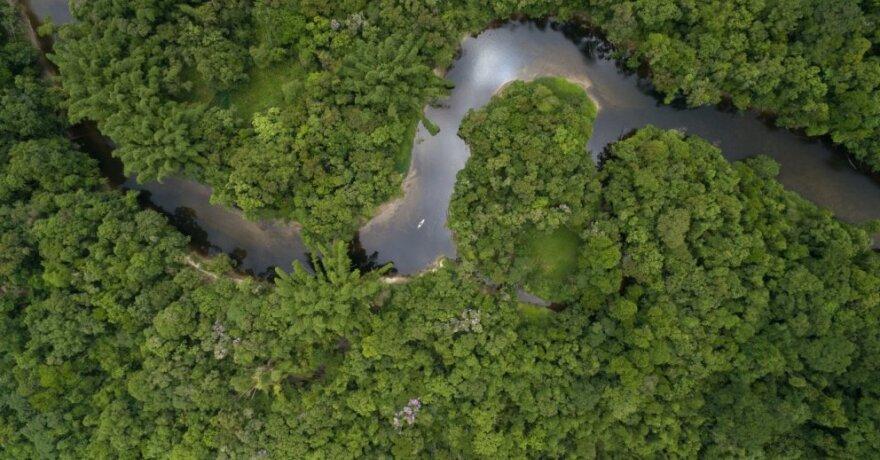 Amazonė