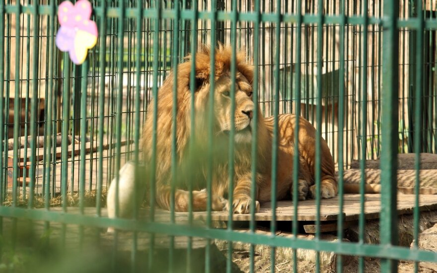 Zoologijos sodo šeimininkas pratrūko: o kas tas gyvūnų teises sugalvojo?