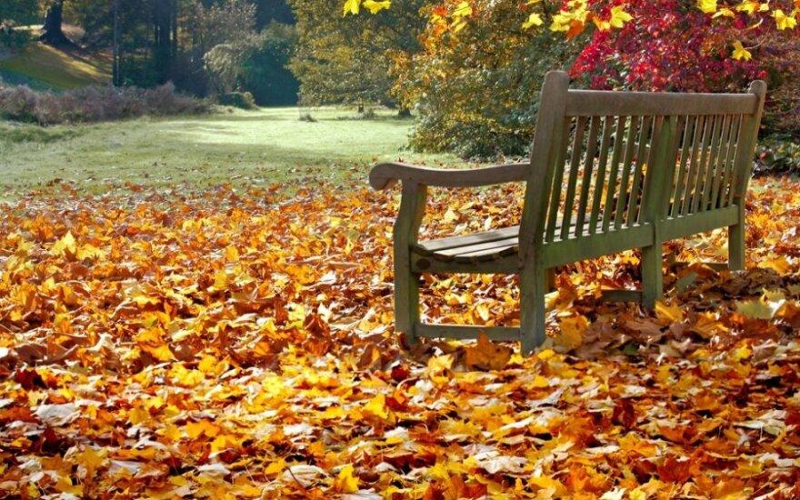 Rudeniniai lapai: grėbti ar negrėbti ir ką daryti nugrėbus?
