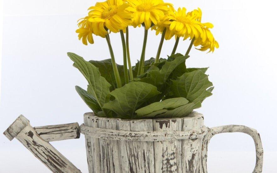 Papuoškite namus dekoruotais vazonėliais