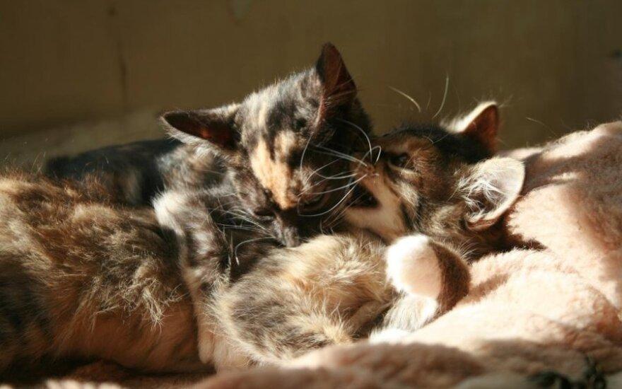 Spalvotos sesutės – Rumba ir Zumba