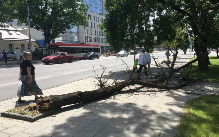 Vilniuje vėjas ant merginos užvertė medį