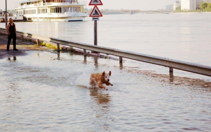 potvynis