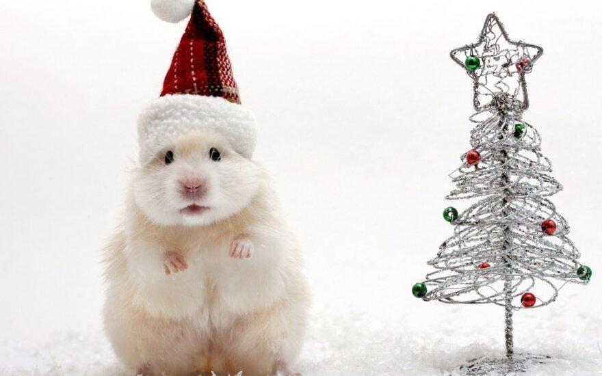 Kaip pelės vagia Kalėdas