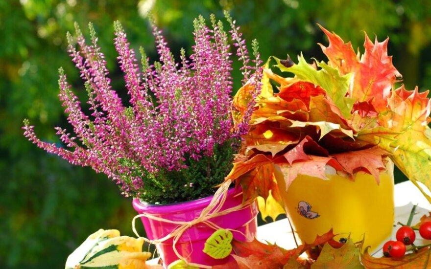 Rudeninės gėlės