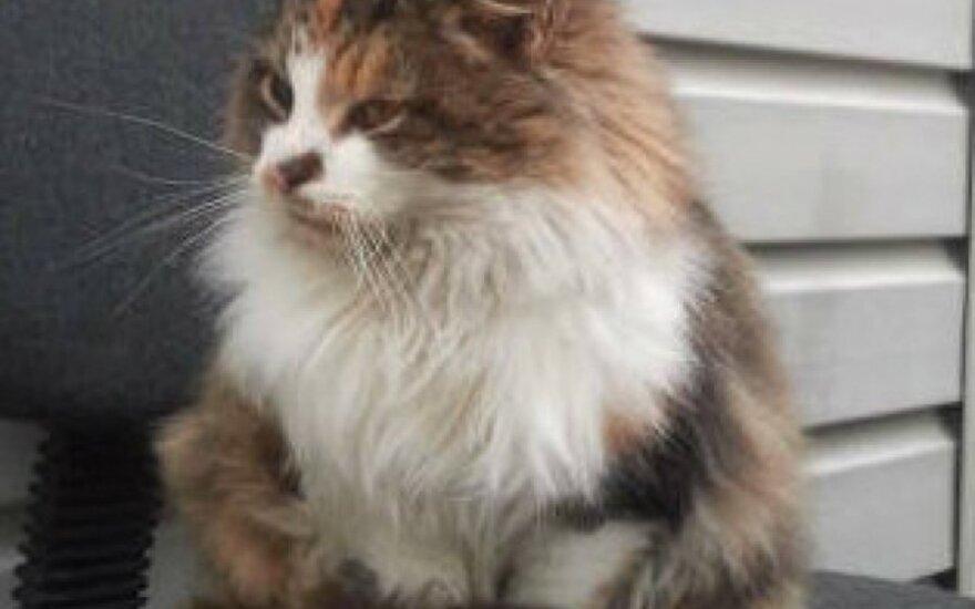 Prie Balžio ežero rasta katytė ieško namų