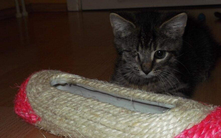 Ryliukas: esu kiek kitoks kačiukas, nebijok manęs