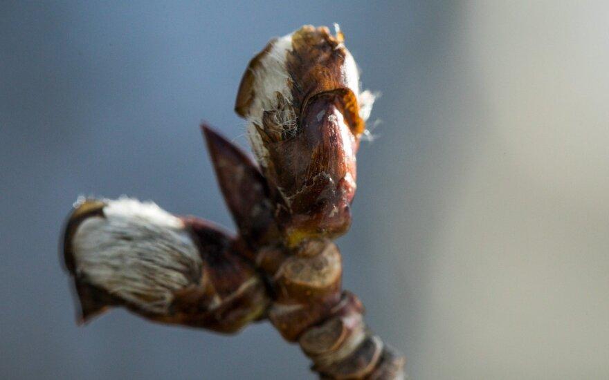 Pagaliau sulaukėme pirmosios pavasario dienos: kaip pasipuošė gamta?