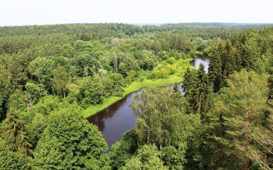 Seimas leido lengviau keisti miško žemės paskirtį