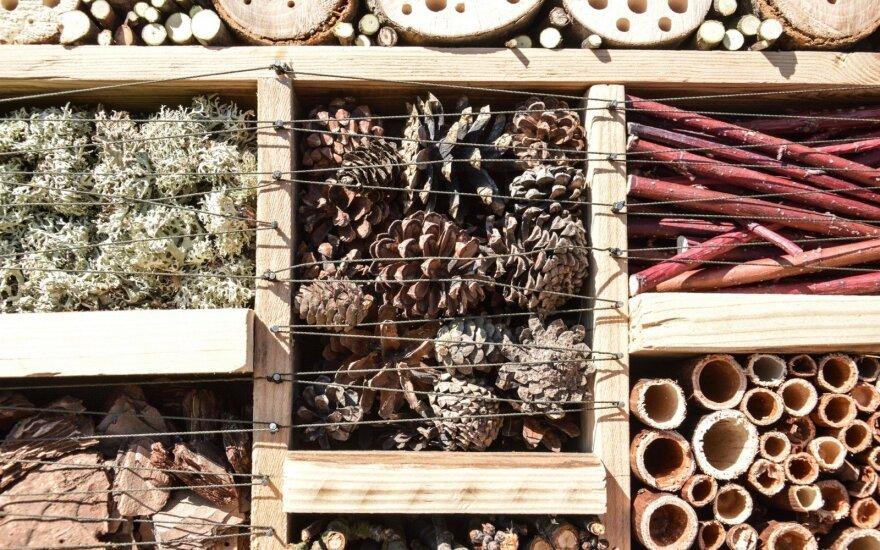 Botanikos sodo gyventojams – nauji vabzdžių viešbučiai