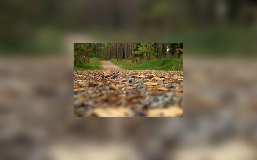 Padangomis užtvertame miško kelyje tykojo plėšikas