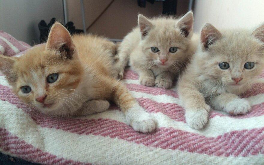 Trims mažyliams reikia namų