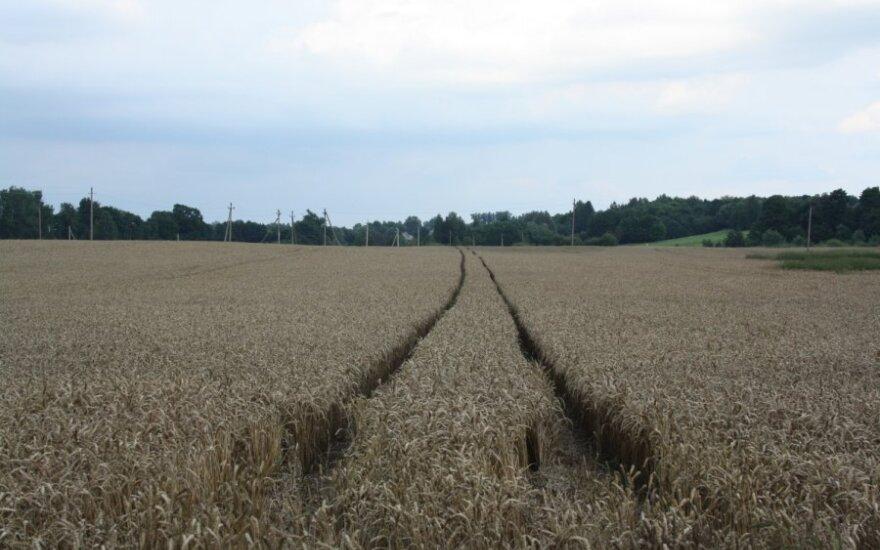 Kiek mokėsime už kitų metų derliaus pasėlių draudimą?