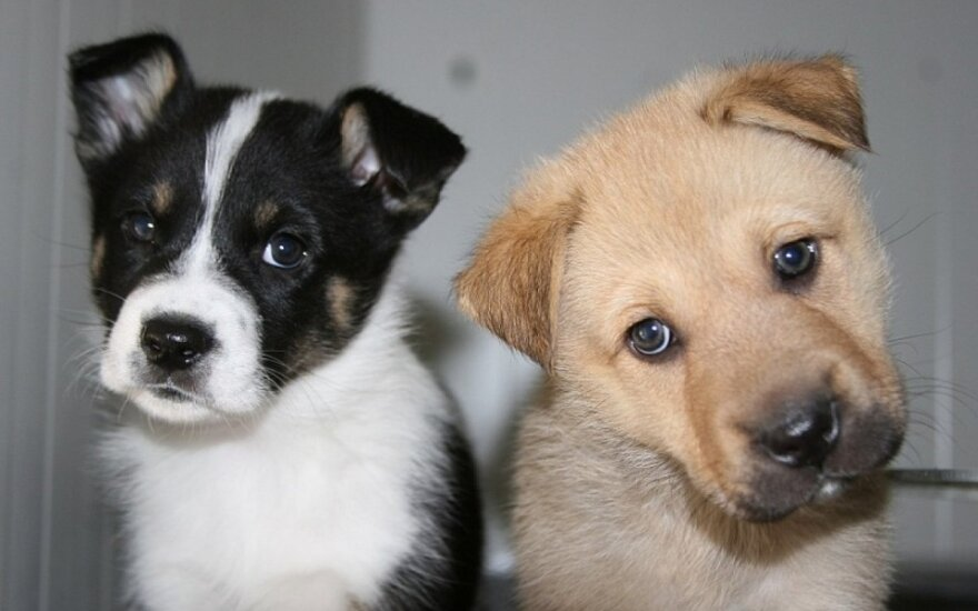 5 teiginiai, siutinantys gyvūnų globos savanorius