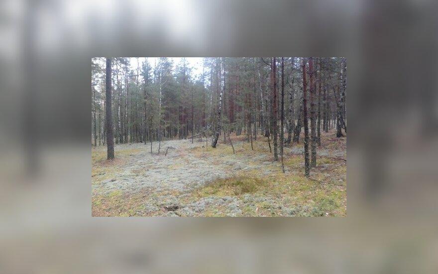 Varėnos miške vietoj grybų rado automobilį