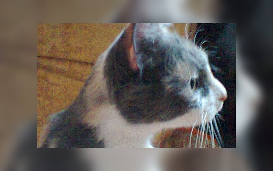 Skubus katytės Dumės prašymas