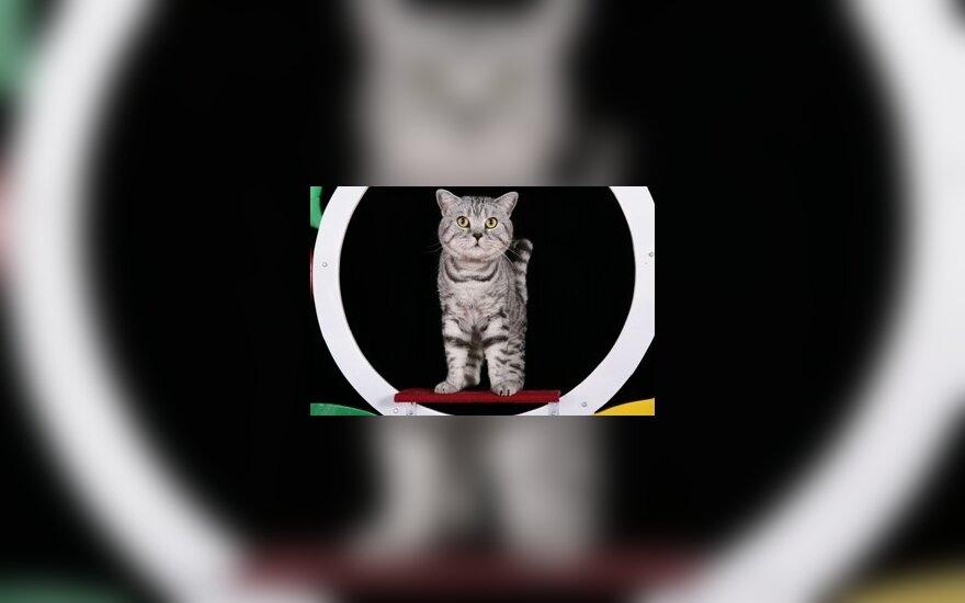 Katinas Borisas