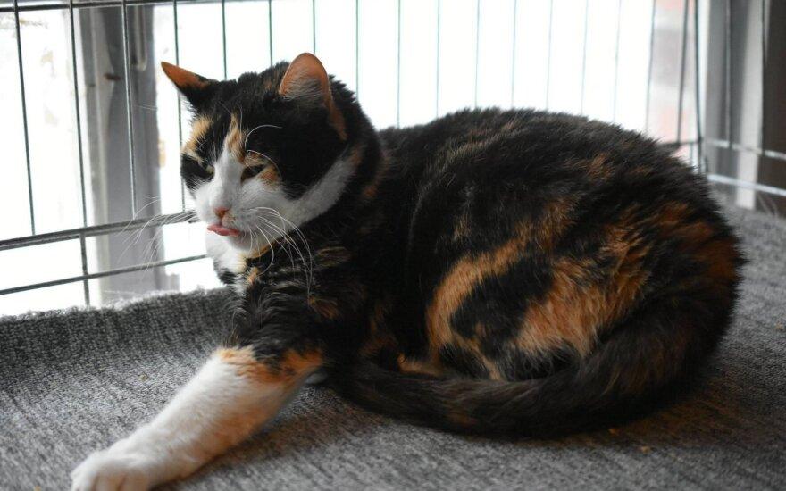Dovanojama katytė Meda: padės jums mėgautis ramybe