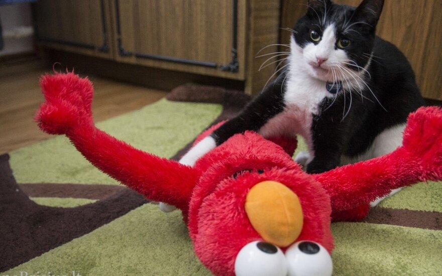 Namuose du katinai atsirado netikėtai: kai siautėja, atrodo, kad turime penkis. Foto / Gintarė Urbaitė