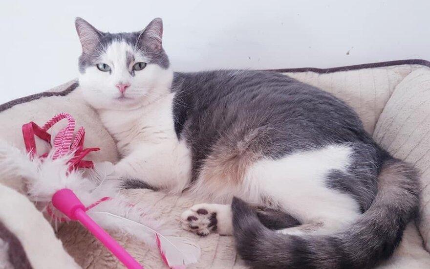 Katinėlių vilos senbuvė Kerė ieško namų