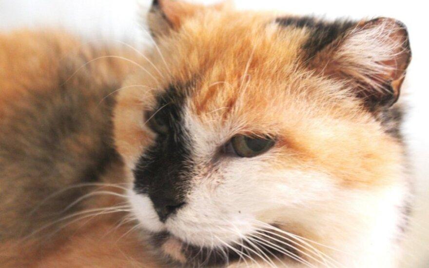 Šiaurinis žvilgsnis, pietinė širdis: katytė ieško namų