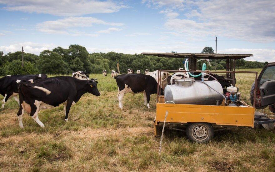 Smulkieji pieno ūkiai mėgina jungtis ir patys užsiimti eksportu