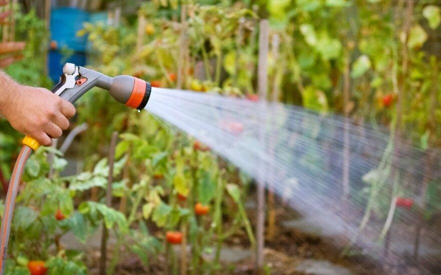 Iš parduotuvių šluoja laistymo įrangą: specialistai ragina taupyti vandenį, nes bus pasekmių