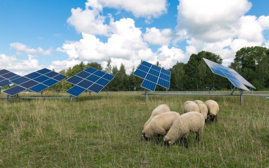 Avys ir saulės jėgainė