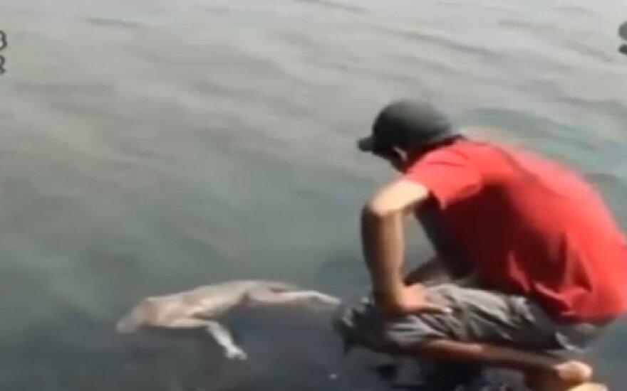 Žinia apie upėje rastą keistą gyvį sukėlė sensaciją žiniasklaidoje