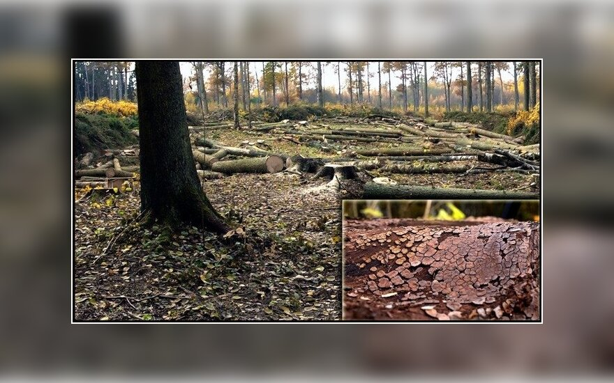 Miško kirtimai