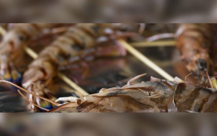 Tigrinės krevetės