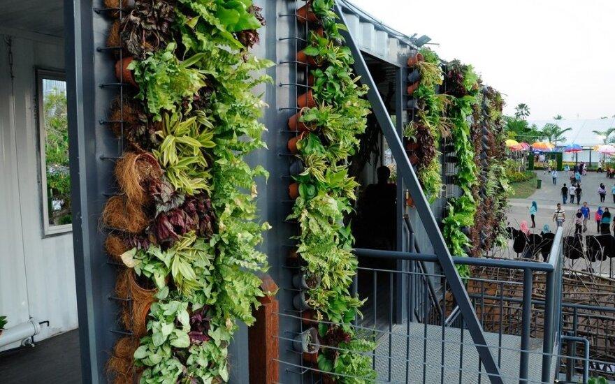 Vertikalių sodų idėjos