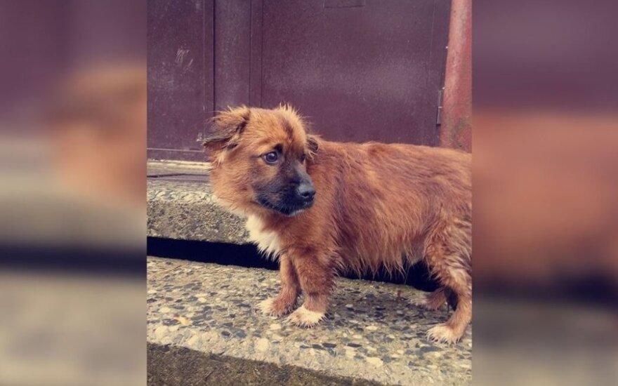 Paliktas šuniukas