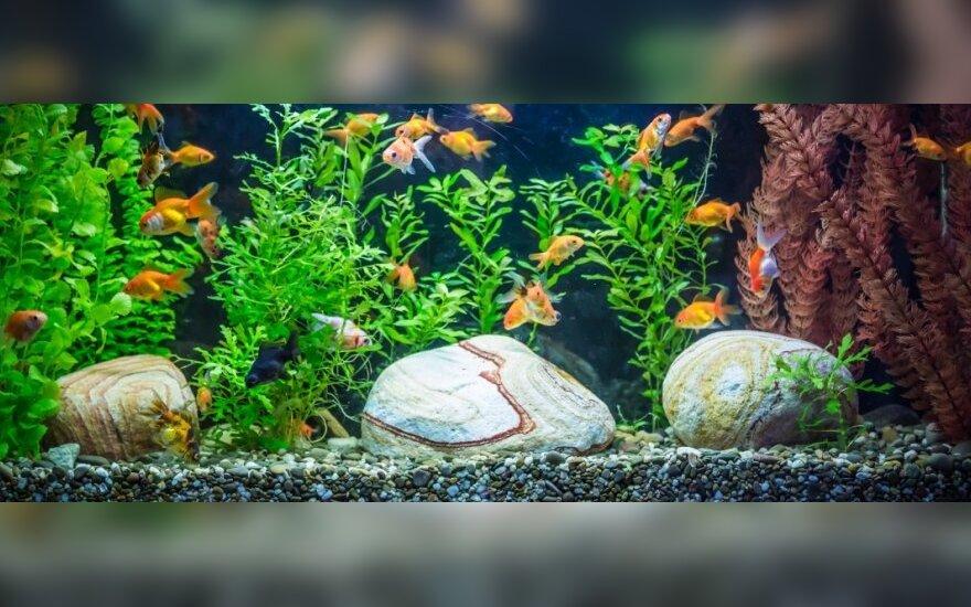 Kokio dydžio akvariumą rinktis pagal žuvyčių rūšį
