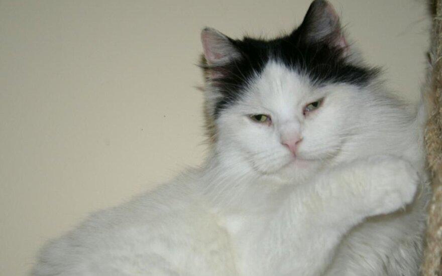 Katė Šapka ieško namų