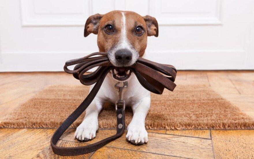 Šuns psichologija: kodėl būtinai turi žaisti ir kada labai liūdi
