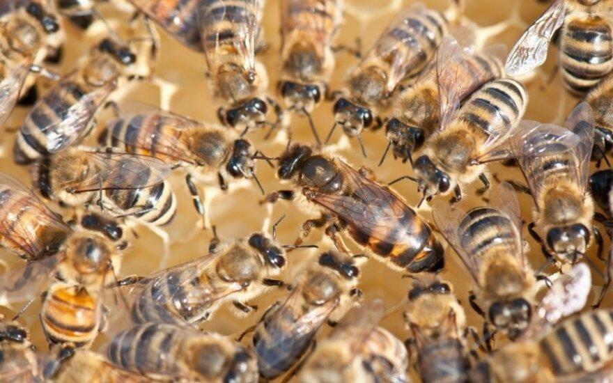 Europos galvos skausmai – nuo euro iki bičių