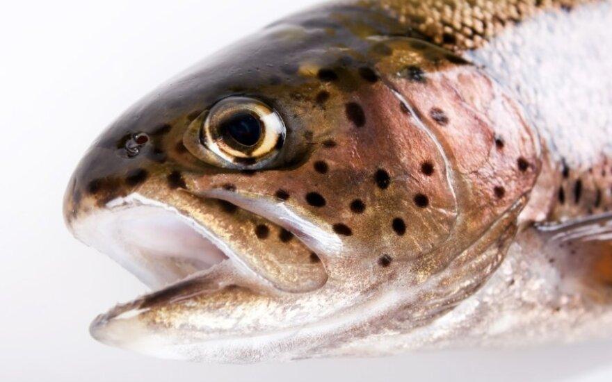 Europos Sąjungoje žuvies gaudys mažiau ir darys tai tvarkingiau