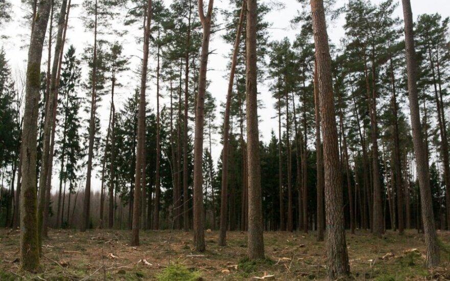 Miškai nėra purškiami nuo erkių, nes tai, pasak specialistų, yra neefektyvu