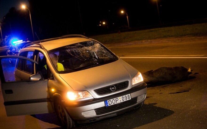Naktį Vilniuje automobilis partrenkė dar vieną briedį
