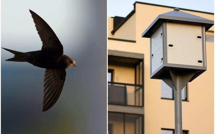 Daugiabutis paukščiams