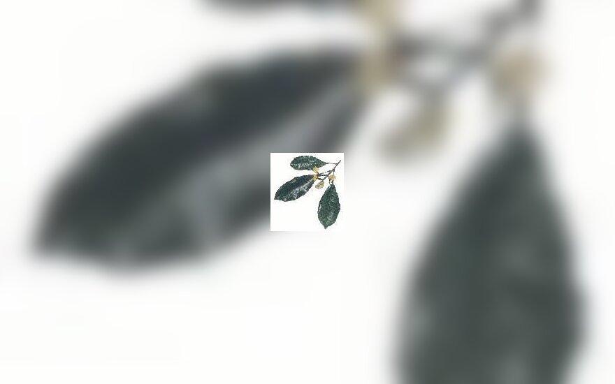 Gvazdikėliai