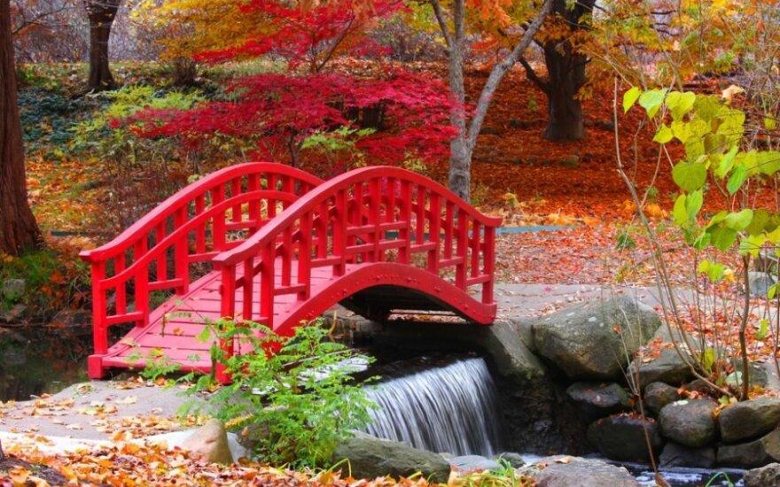 Vilniaus japoniško sodo vaizdai – jau internete