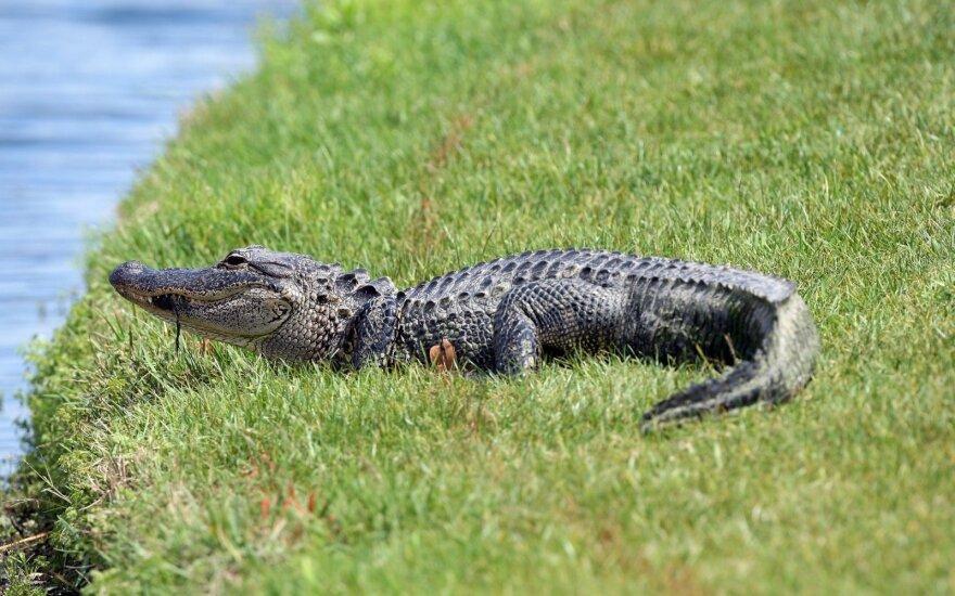 Vyras Floridoje įsilaužė į aligatorių fermą ir su jais išsimaudė
