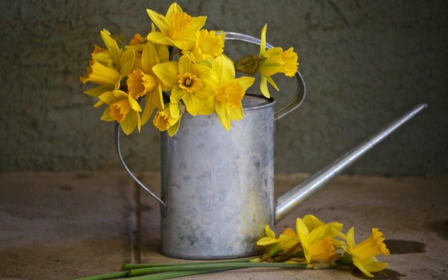 Astrologės Lolitos prognozė balandžio 28 d.: kurkite gražius santykius